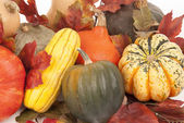 Fall harvest of squash with a white background — Stock Photo