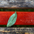 Leaf on wooden surface  — Stock Photo