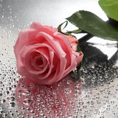 Rose on wet background — ストック写真
