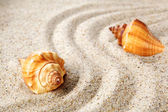 Sea shells on sand. Summer beach background. — Stock Photo