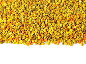 Bee gathered pollen granules background — Stock Photo