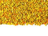 Bee gathered pollen granules background — Stok fotoğraf