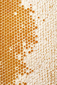 Honey making in honeycombs  — 图库照片