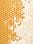 Honey making in honeycombs  — Foto Stock