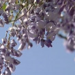 Stock Video: Blossoming tree