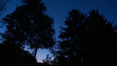 Trees in night time — Stock Video