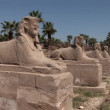 Temple of Luxor ruins — Stock Video #37229181