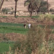Stock Video: Farming off Nile
