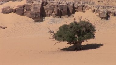 Dry landscape off the Nile River — Stock Video