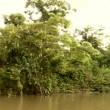 Stock Video: Boat trip at Amazon river