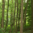 Forest in Germany — Stock Video #38993351