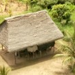 Stock Video: Huts in rain forest