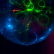 Disco ball — Wideo stockowe #38993533