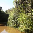 Stock Video: Trip on Amazon river