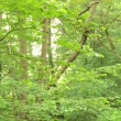 Forest in Germany — Stock Video #38994713