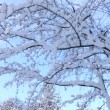 Winter tree — Stock Video