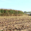 Stock Video: Corn harvest