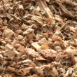 Stock Video: Corn at biogas plant