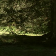 Beautiful green forest — Stock Video