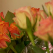 Roses bouquet — Stock Video #38998929