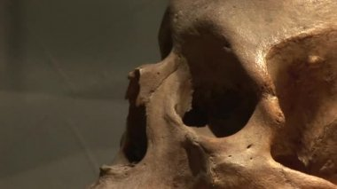 Human remains — Stock Video