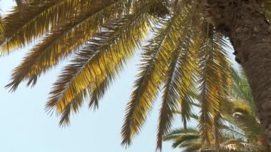 Palm trees — Stock Video