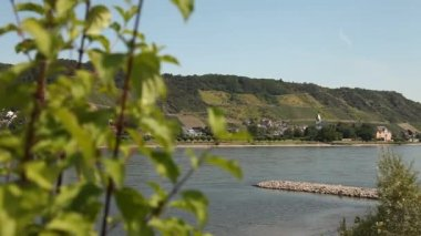 Rhine in Germany with winegrowing area — Stock Video