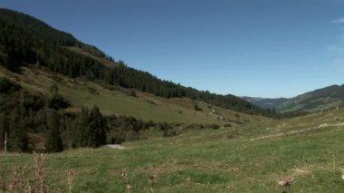 Beautiful nature in Austria — Stock Video