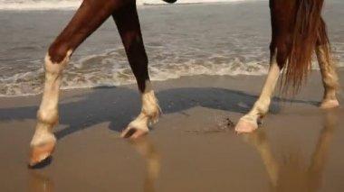 Horse legs — Stock Video