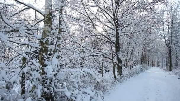 Mujer en bosque de invierno — Vídeo de stock