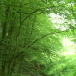 Forest in Germany — Stock Video #39000851