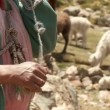 Stock Video: Farmer spinning yarn while sheep graze