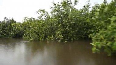Wycieczki łodzią na rzece Amazonka — Wideo stockowe