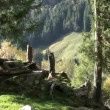 Forest in austrialps — Stock Video #39149577
