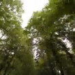 Stock video: Driving in forest in south tyrol