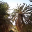 Palm trees in crete — Stock Video #39149811