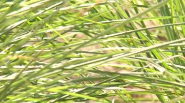 Grass plants — Stock Video
