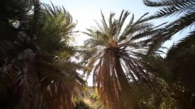 Palm trees in crete — Stock Video
