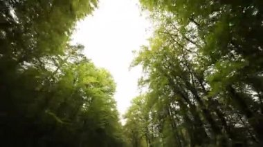 Driving in forest in south tyrol — Stock Video