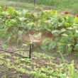Stock Video: Vegetable patch