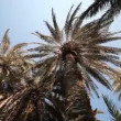 Palm trees in crete — Stock Video #39151447