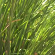 Stock Video: Grass plants