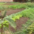 Stok video: Vegetable patch