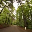 Stock video: Driving forest in italy
