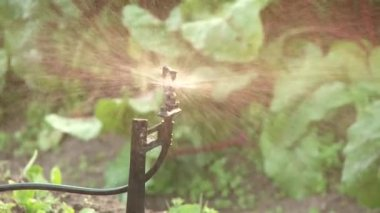 Sprinkler in garden — Stock Video
