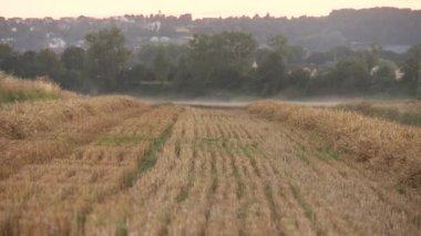 Harvested Grain field — Stockvideo
