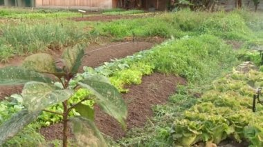 Vegetable patch — Stockvideo