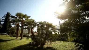 Palm trees in sun — Stock Video