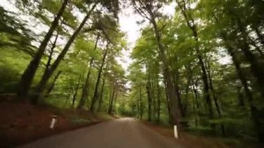Driving forest in italy — Stock Video