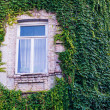Wall with ivy — Stock Photo